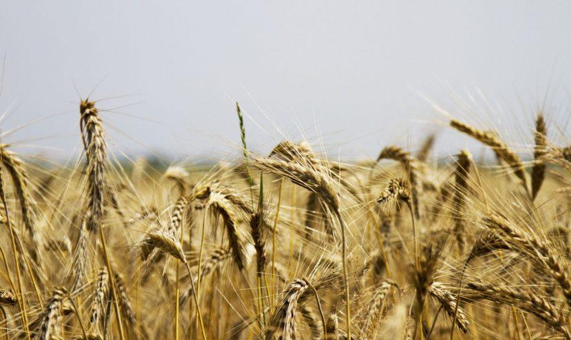 Impactul COVID-19 asupra industriei agricole în Republica Moldova