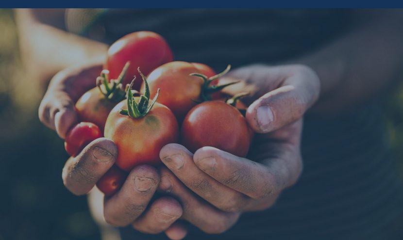 Afacere în agricultură – nu pierde oportunitățile!